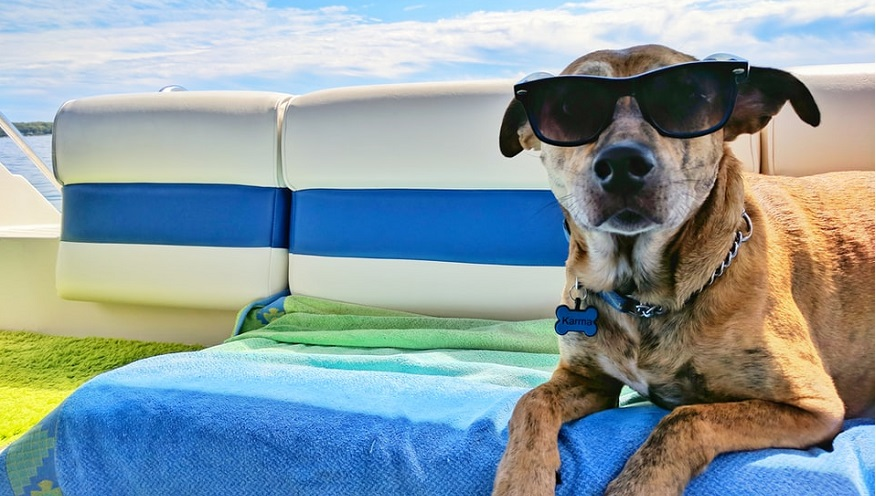Pet insurance claim - dog in summer wearing shades