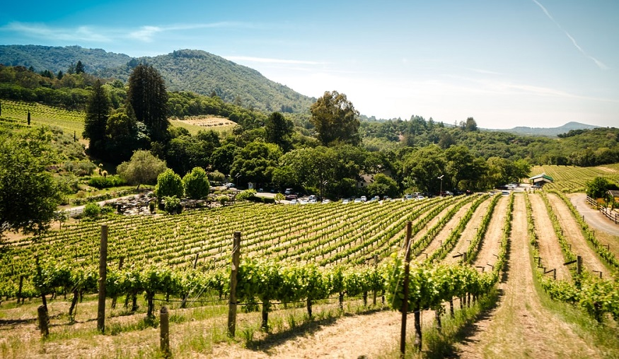 Wildfire insurance - California winery in Sonoma