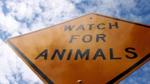 Auto insurance claims - Watch for Animals Sign